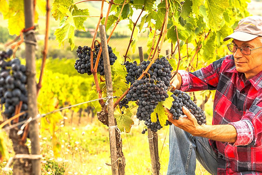 Immagine 2019 Italy wine production